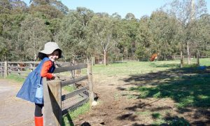 Collingwood Children's Farm, 18 St Heliers St, Abbotsford