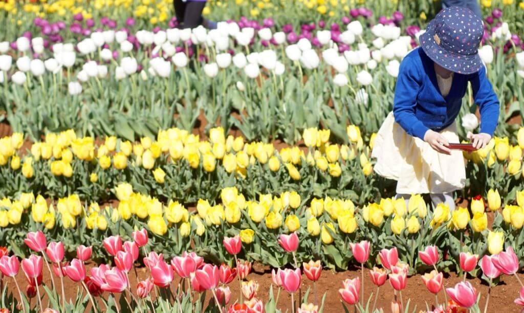 esselaar Tulip Festival, Tesselaar Tulip Farm, 357 Monbulk Rd, Silvan