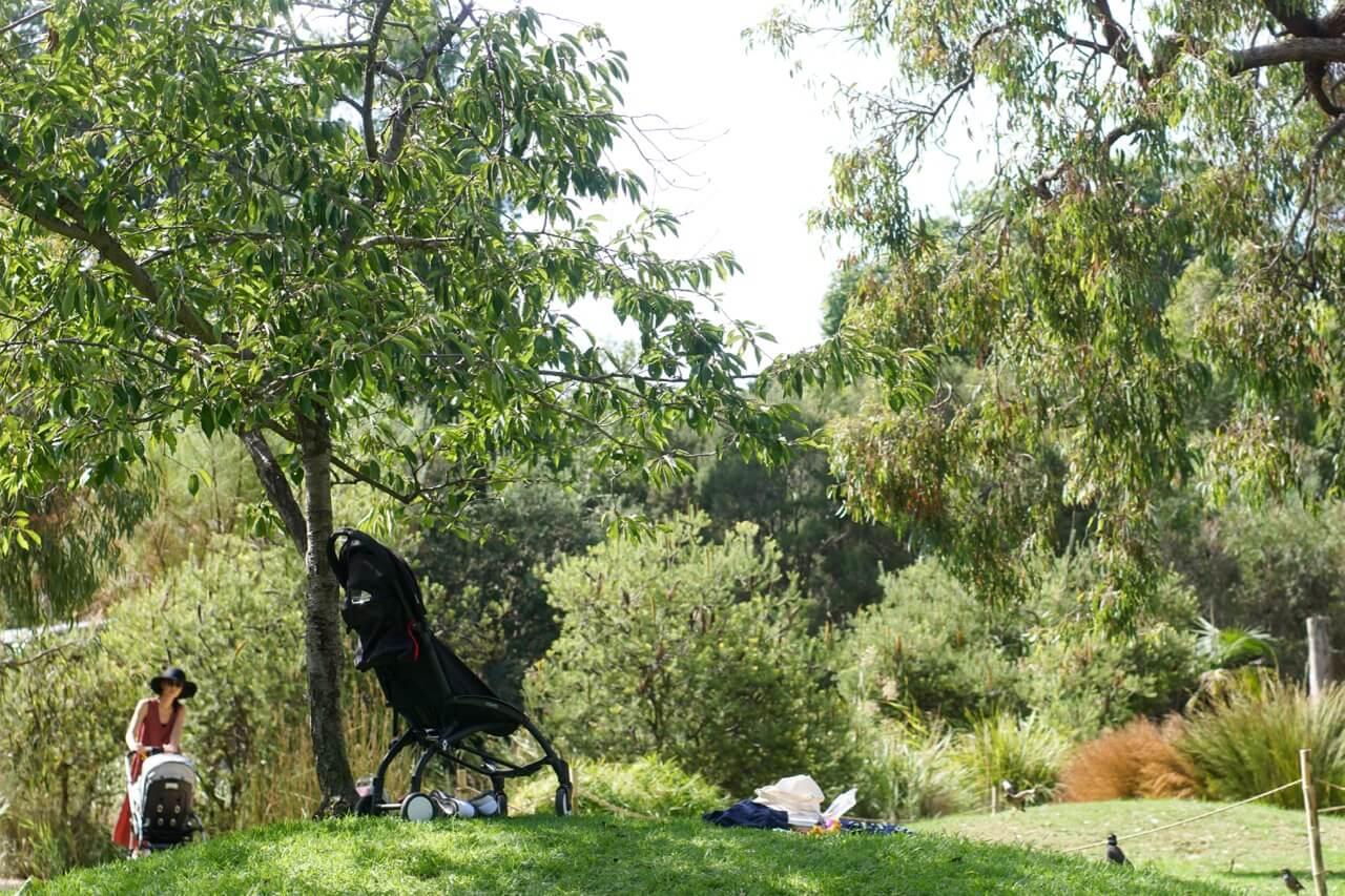Children 39 S Garden Botanic Gardens Melbourne Tot Hot Or Not