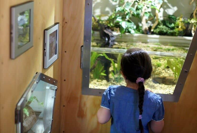 Lion Gorge Melbourne Zoo