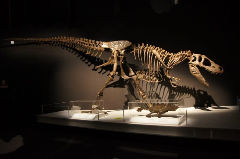 tyrannosaurs sciencewoks