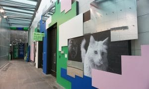 Studio Cats: Andy Warhol   Ai Wei Wei For Kids, National Gallery Of Victoria, 180 St Kilda Rd, Melbourne