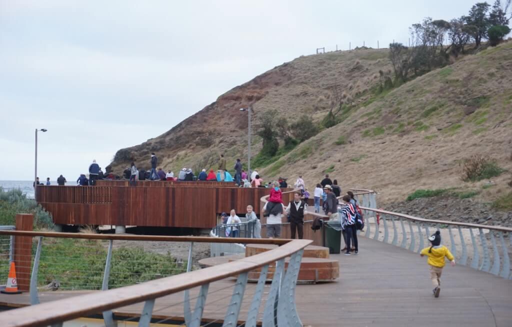 Phillip Island Penguins Summer
