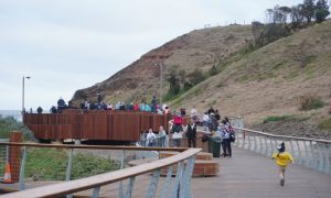 Phillip Island Penguin Parade, 1019 Ventnor Rd, Summerlands, Phillip Island