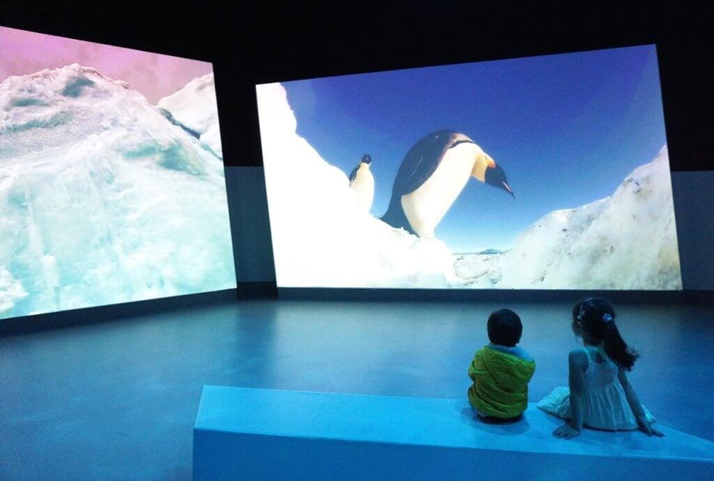 WWF Antarctic Journey, The Nobbies Centre, 1320 Ventnor Road, Summerlands