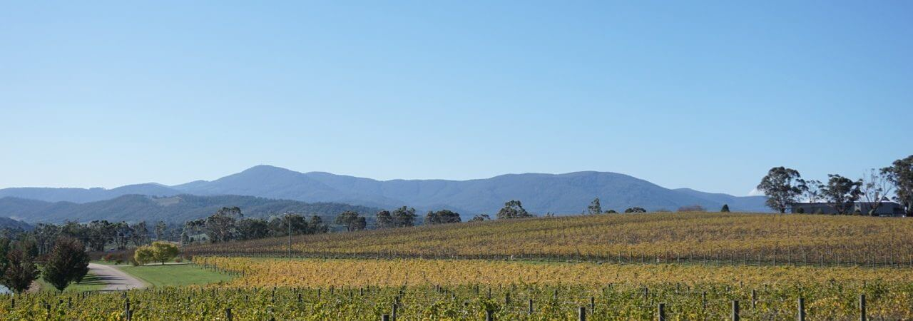 Top 22 Things To Do In The Yarra Valley With Kids