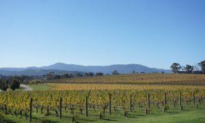 Oakridge Wines, Maroondah Highway, Coldstream, Yarra Valley