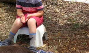Wombat Healesville Zoo