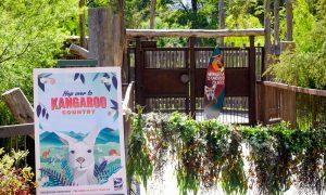 Kangaroo Country Healesville Sanctuary