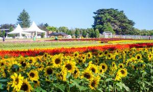 Kabloom Flower Festival