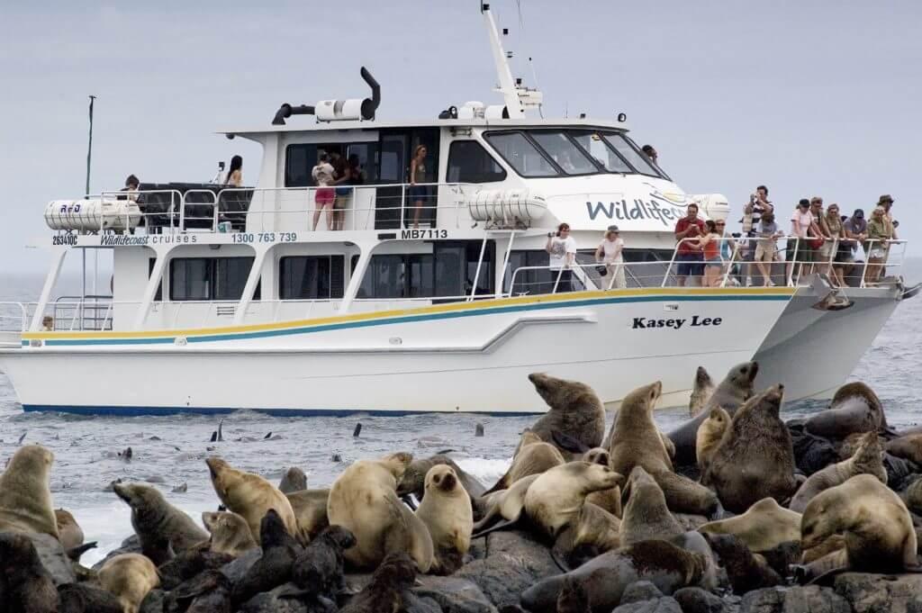 wildlife coast cruises phillip island