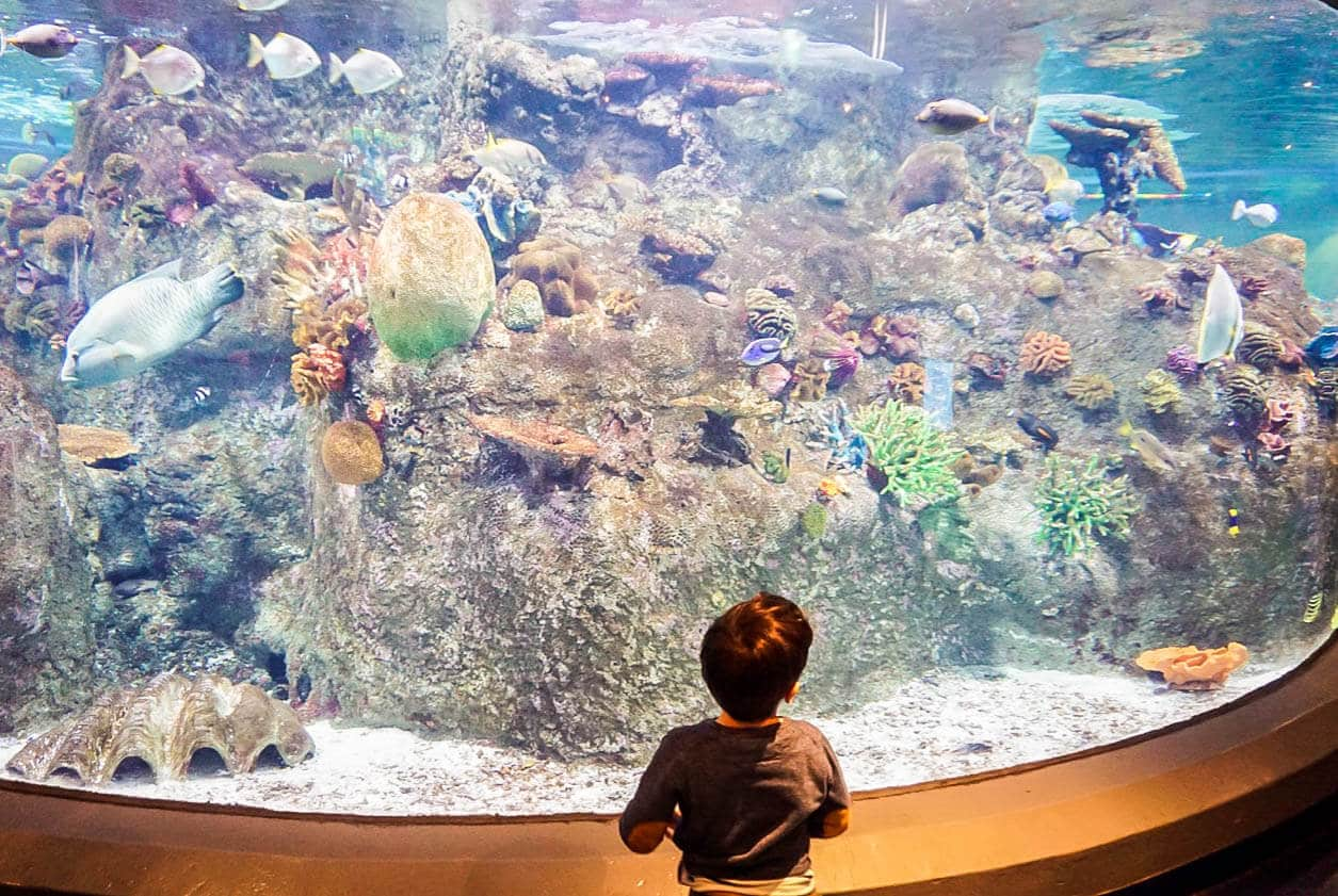 7b52e8e1517 SEA LIFE Melbourne Aquarium