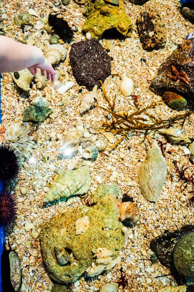 marine discovery centre queenscliff